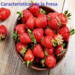 Características de la fresa ¡beneficios para la salud!
