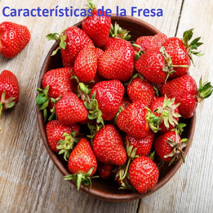 características-de-la-fresa-1
