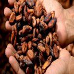 Propiedades del cacao puro ¡Descubre sus grandes beneficios!