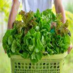 ¿Qué aportan los vegetales verdes? ¡Grandes beneficios!