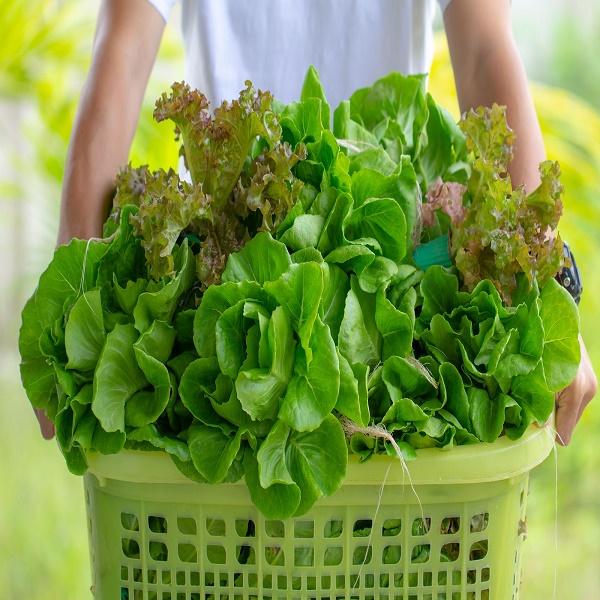 que aportan los vegetales verdes-4